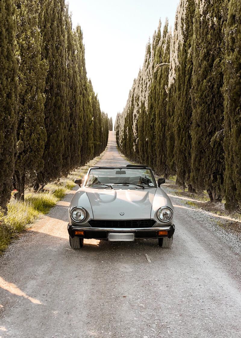 Auto sul viale di Bolgheri